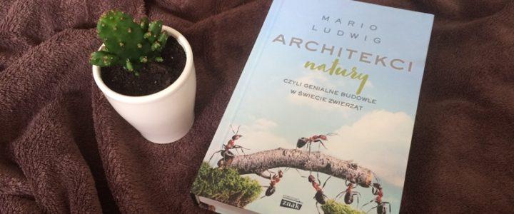Architekci natury, czyli genialne budowle w świecie zwierząt